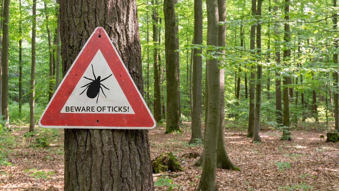 Post Treatment Lyme Disease Syndrome- Genetic Lifehacks